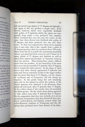 Image of Darwin-F1277-1877-077