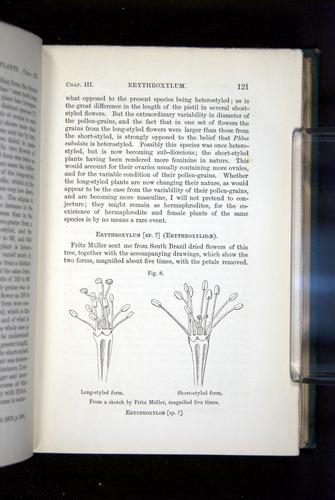 Image of Darwin-F1277-1877-121