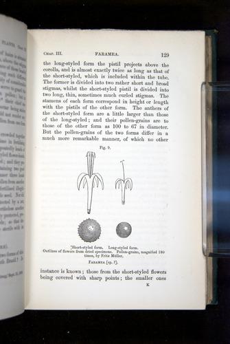 Image of Darwin-F1277-1877-129
