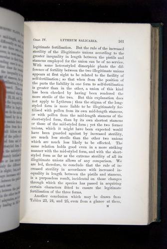 Image of Darwin-F1277-1877-161