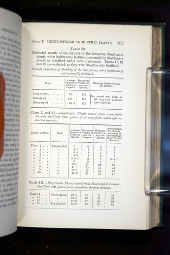 Image of Darwin-F1277-1877-205