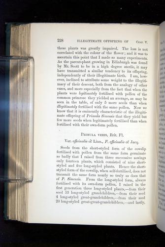 Image of Darwin-F1277-1877-228