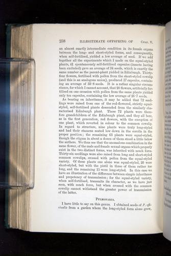 Image of Darwin-F1277-1877-238