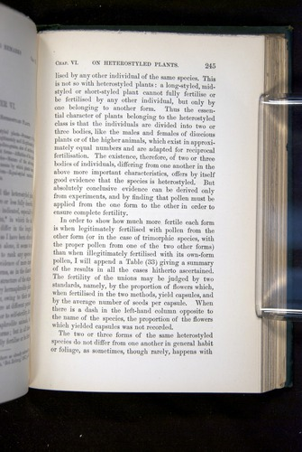 Image of Darwin-F1277-1877-245