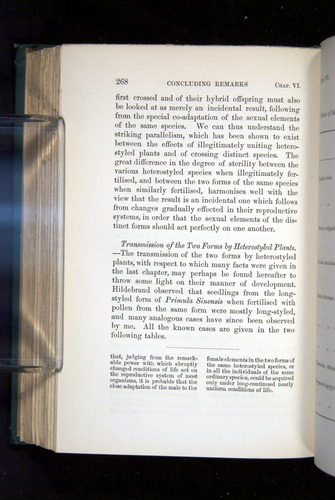 Image of Darwin-F1277-1877-268