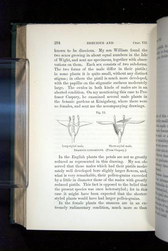 Image of Darwin-F1277-1877-294