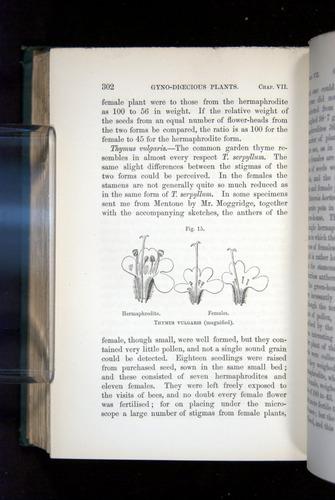 Image of Darwin-F1277-1877-302
