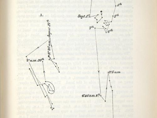 Image of Darwin-F1325-1880-zzz-det-277