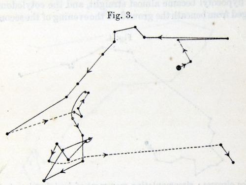 Image of Darwin-F1325-1880-zzzz-det-013