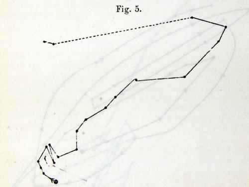 Image of Darwin-F1325-1880-zzzz-det-015