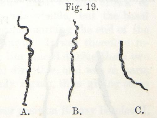 Image of Darwin-F1325-1880-zzzz-det-029-2