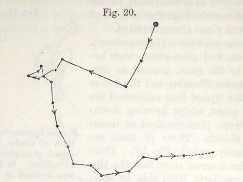 Image of Darwin-F1325-1880-zzzz-det-030-1