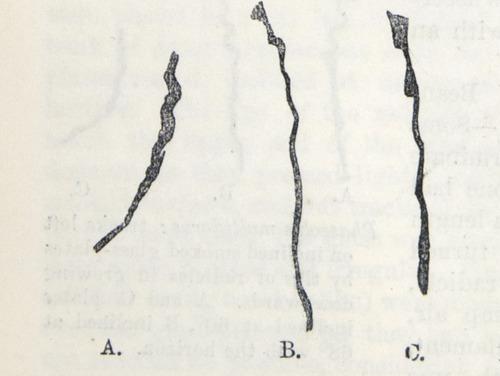 Image of Darwin-F1325-1880-zzzz-det-030-2