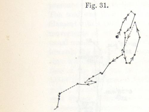 Image of Darwin-F1325-1880-zzzz-det-044