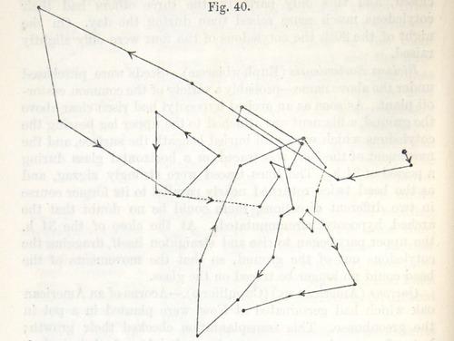 Image of Darwin-F1325-1880-zzzz-det-054