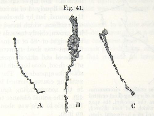 Image of Darwin-F1325-1880-zzzz-det-055