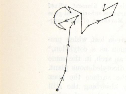 Image of Darwin-F1325-1880-zzzz-det-060