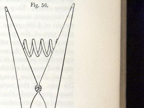 Image of Darwin-F1325-1880-zzzz-det-075