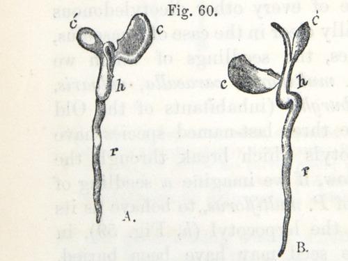 Image of Darwin-F1325-1880-zzzz-det-094