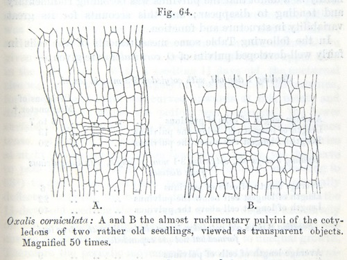 Image of Darwin-F1325-1880-zzzz-det-119