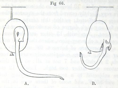 Image of Darwin-F1325-1880-zzzz-det-159