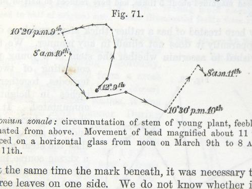 Image of Darwin-F1325-1880-zzzz-det-203