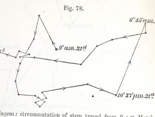 Image of Darwin-F1325-1880-zzzz-det-208