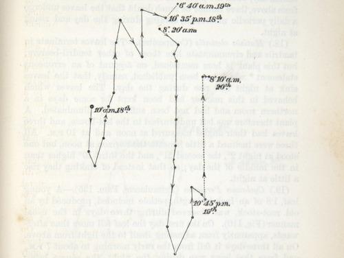 Image of Darwin-F1325-1880-zzzz-det-245