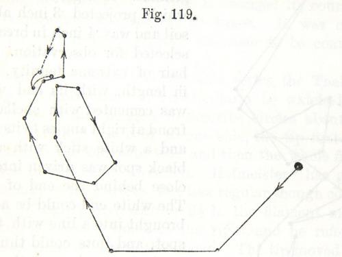 Image of Darwin-F1325-1880-zzzz-det-257