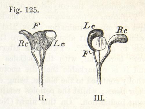 Image of Darwin-F1325-1880-zzzz-det-310