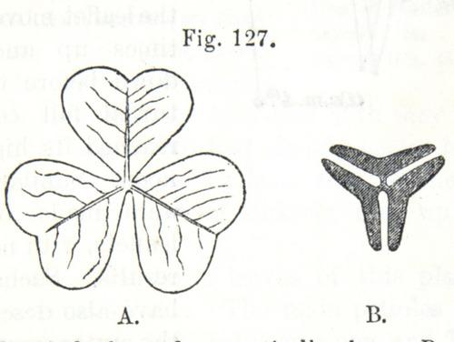 Image of Darwin-F1325-1880-zzzz-det-325