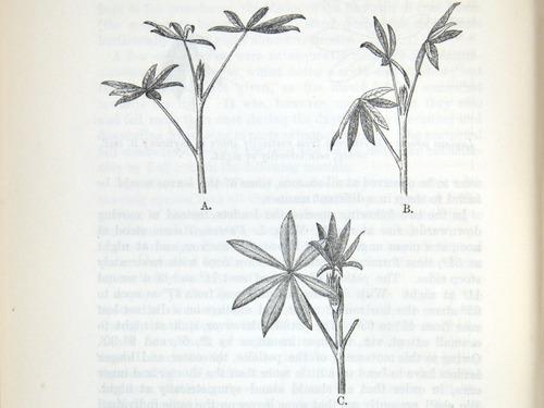 Image of Darwin-F1325-1880-zzzz-det-342