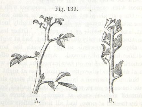 Image of Darwin-F1325-1880-zzzz-det-346