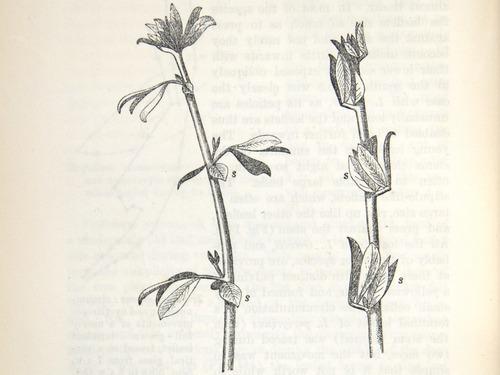 Image of Darwin-F1325-1880-zzzz-det-354