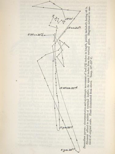 Image of Darwin-F1325-1880-zzzz-det-360