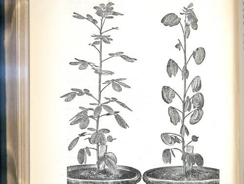 Image of Darwin-F1325-1880-zzzz-det-370