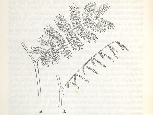 Image of Darwin-F1325-1880-zzzz-det-382