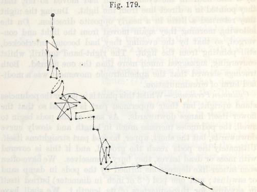 Image of Darwin-F1325-1880-zzzz-det-434