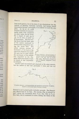 Image of Darwin-F1325-1880-011