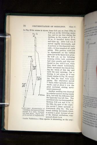 Image of Darwin-F1325-1880-024