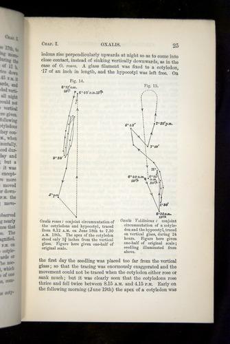 Image of Darwin-F1325-1880-025