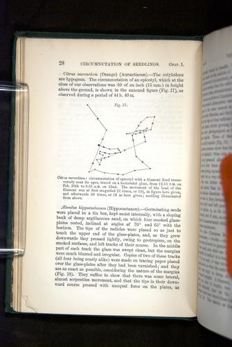 Image of Darwin-F1325-1880-028