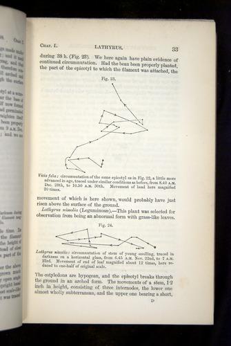 Image of Darwin-F1325-1880-033