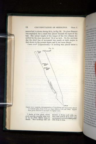 Image of Darwin-F1325-1880-034