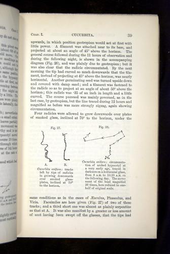 Image of Darwin-F1325-1880-039