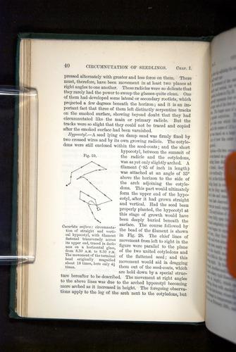 Image of Darwin-F1325-1880-040