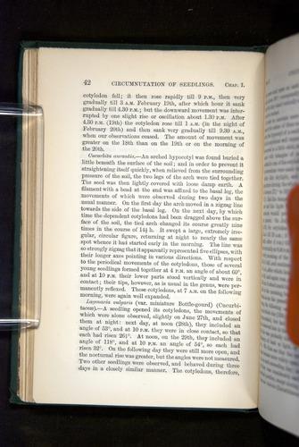 Image of Darwin-F1325-1880-042