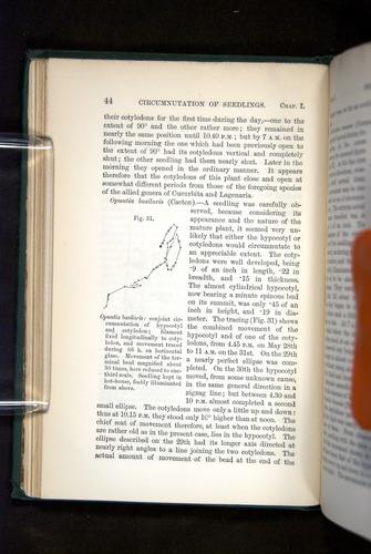 Image of Darwin-F1325-1880-044