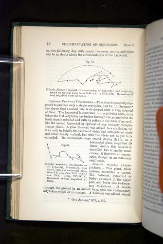 Image of Darwin-F1325-1880-046