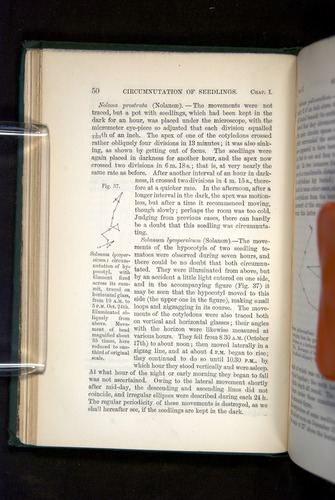 Image of Darwin-F1325-1880-050